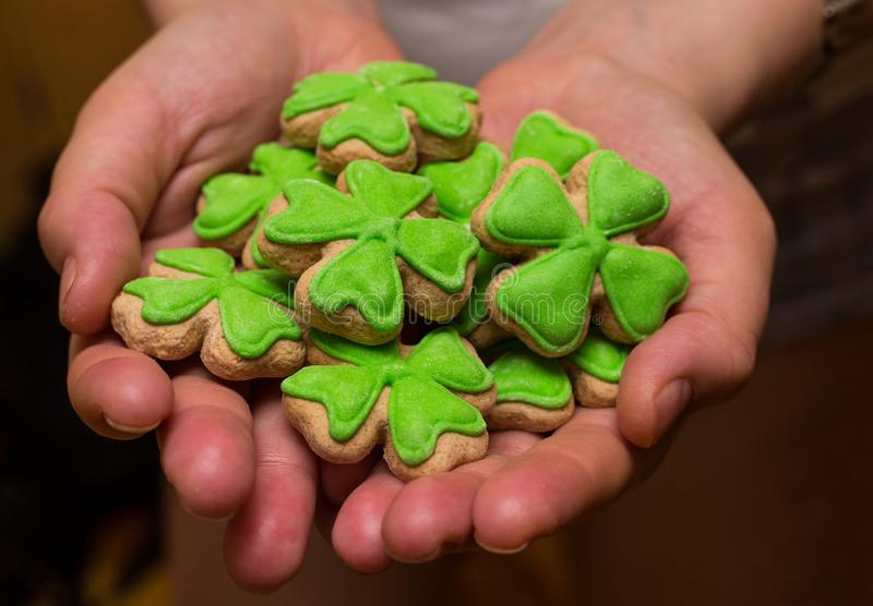Set cookies gingerbread clover covered with green mastic symbol holiday day saint patric on open palm stock photo