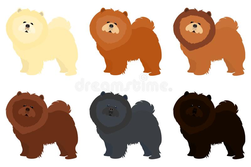Chow Chow Puppy Stock Illustrations 582 Chow Chow Puppy Stock