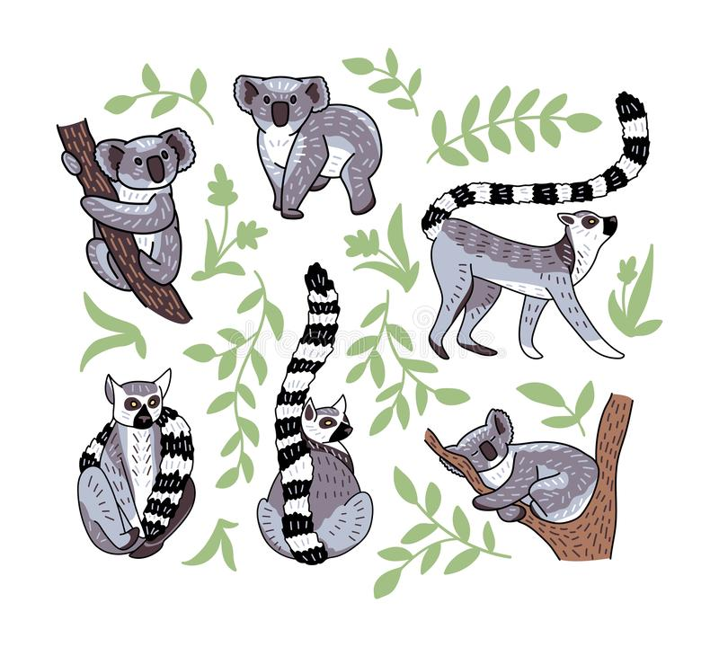 Set of cute doodle ring-tailed lemurs and koala bears in different poses. Vector illustration of animal characters isolated on stock illustration