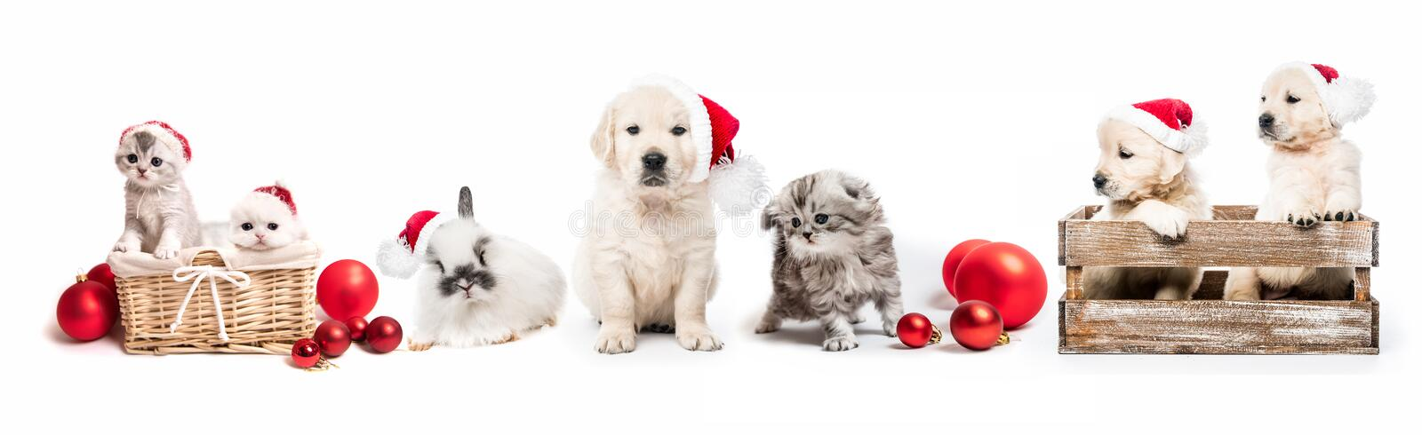 Set of home pets with new year decorations royalty free stock photos