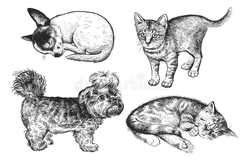 Set of cute puppies and kittens. Hand-made black and white drawing of Dogs and cats stock illustration