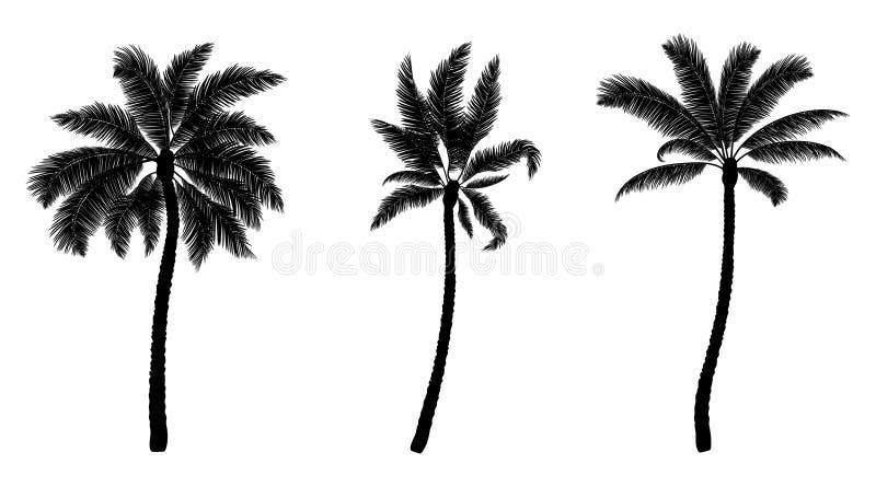Set czarna wektorowa palma ręk patroszeni drzewa ilustracja wektor