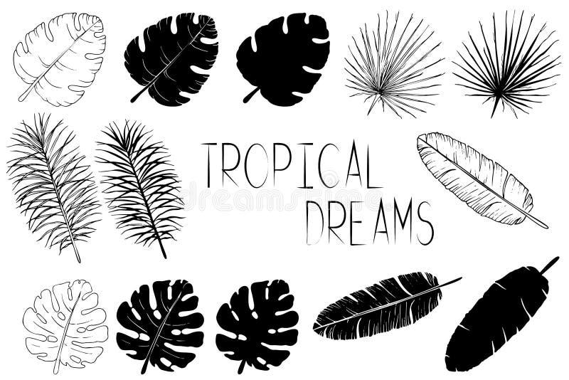 Set czarny i biały palmowi liście ilustracja wektor