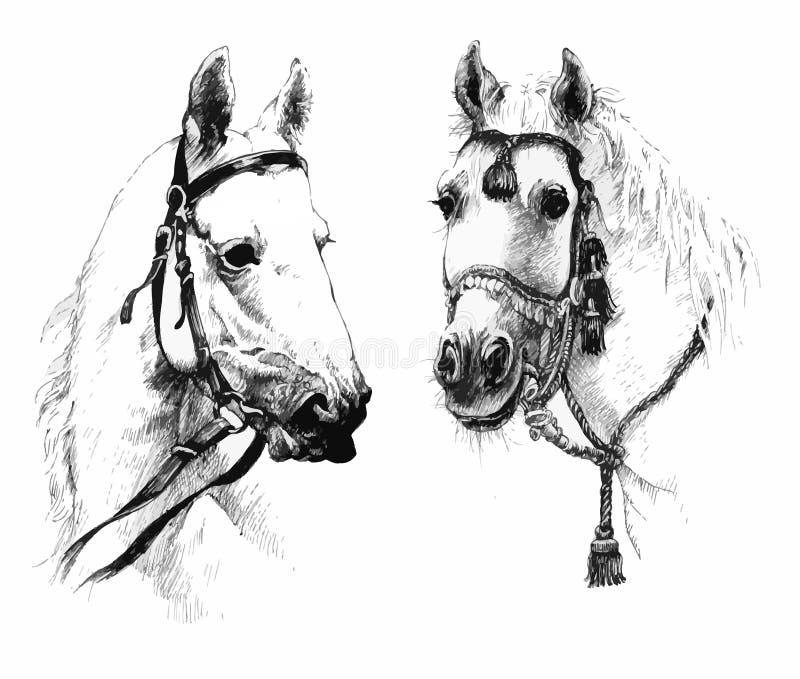 Set czarny i biały ręka rysować koń głowy royalty ilustracja