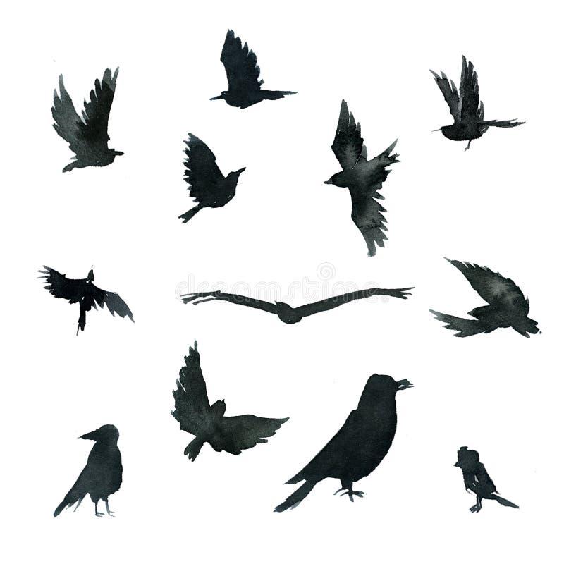 Set czerni wrony ptaki w różnorodnych pozach ilustracji