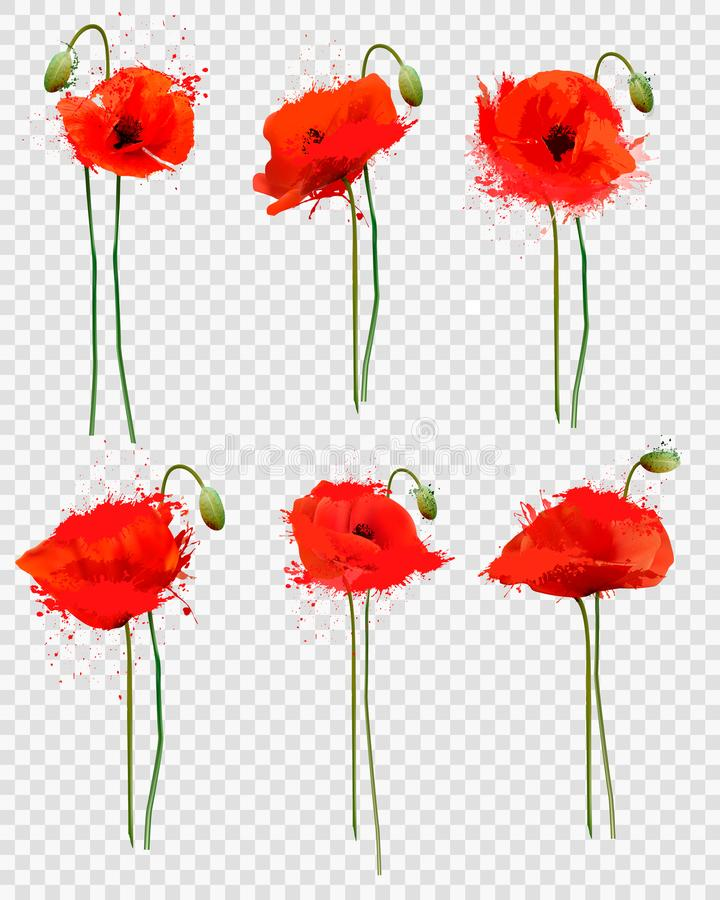 Set czerwoni maczki kwitnie na przejrzystym tle royalty ilustracja