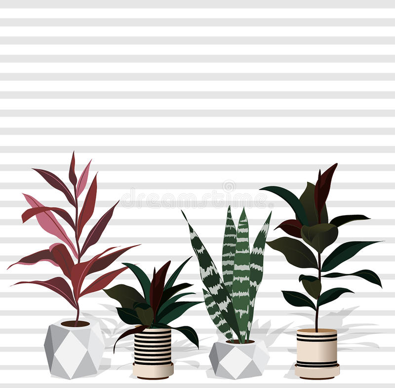Set of decorative plants in pots of different sizes and colors . stock illustration