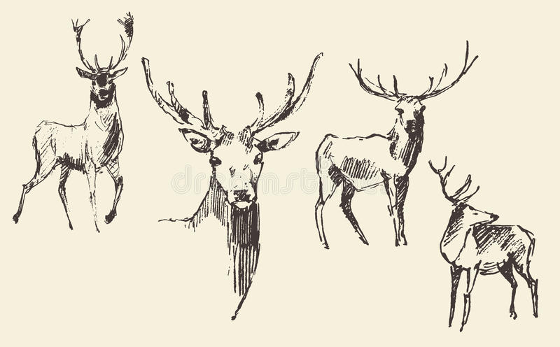 Set of deers engraving vintage hand drawn sketch. Set of deers engraving style vintage illustration hand drawn sketch royalty free illustration
