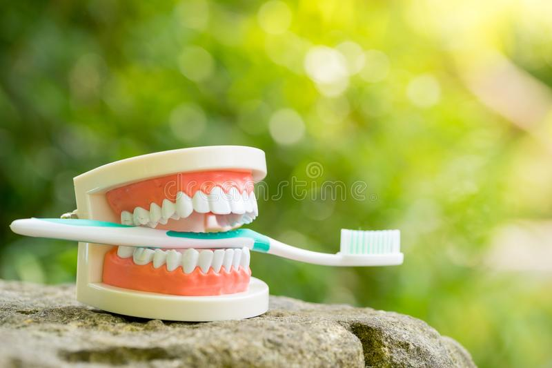 Set of Dentist`s medical equipment tools in the park royalty free stock photography