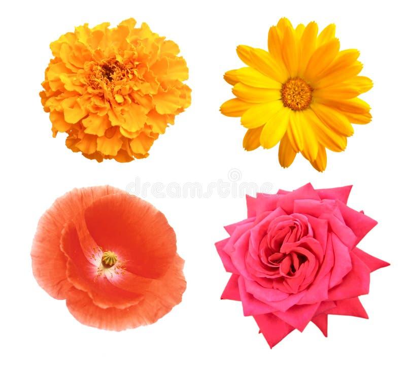 Set der Blume stockfoto