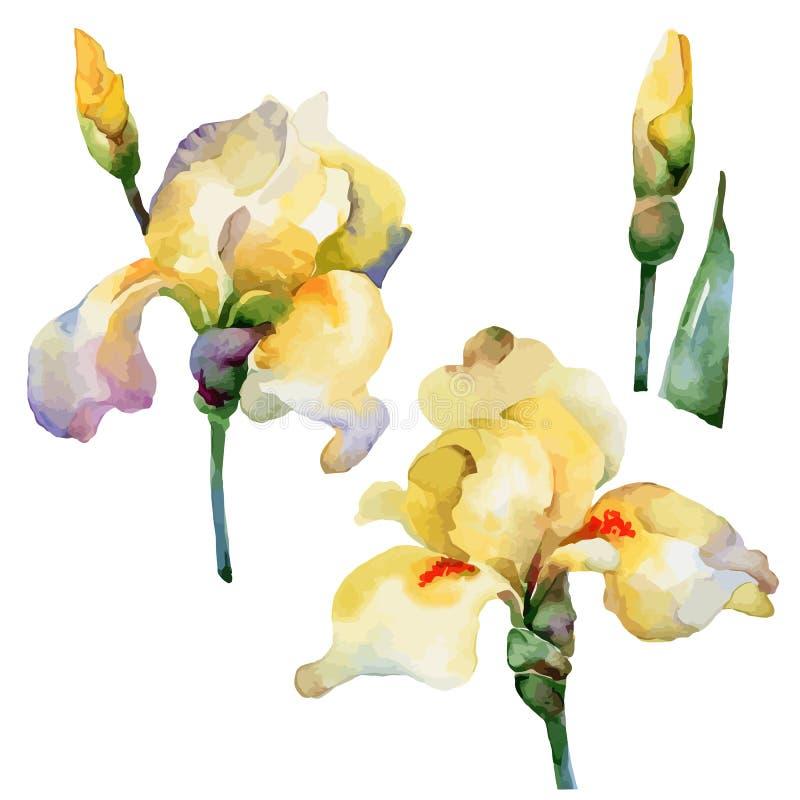 Set der Blume vektor abbildung
