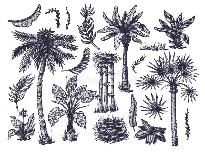 Set di alberi tropicali grafici quali palma, banana, monstera isolati Vettore royalty illustrazione gratis