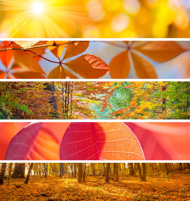 Set of Different Autumn Banners - colorful backgrounds, beautifu. L fall season stock photo