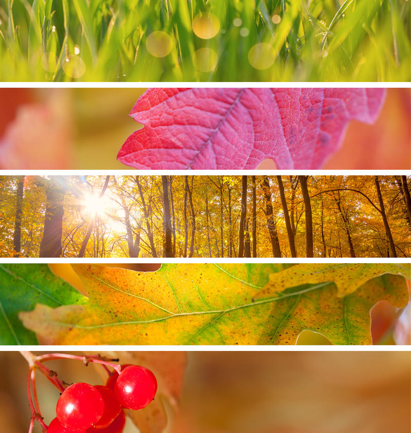 Set of Different Autumn Banners for Internet, beautiful Autumn. Set of Different Autumn Banners - colorful vibrant backgrounds for Internet, beautiful Autumn stock images