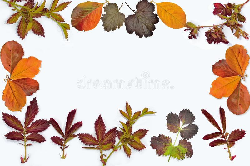 Colorful autumn leaves frame on white background stock photos