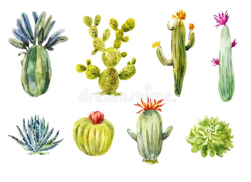 Set of different cacti. Watercolor illustration. Isolated on white. Blossom succulents stock illustration
