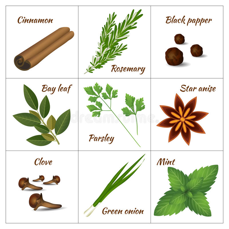 Set of different culinary herbs or medicinal, curative aromatic herbs and spices. Realistic style vector illustration. Set of different culinary herbs or stock illustration