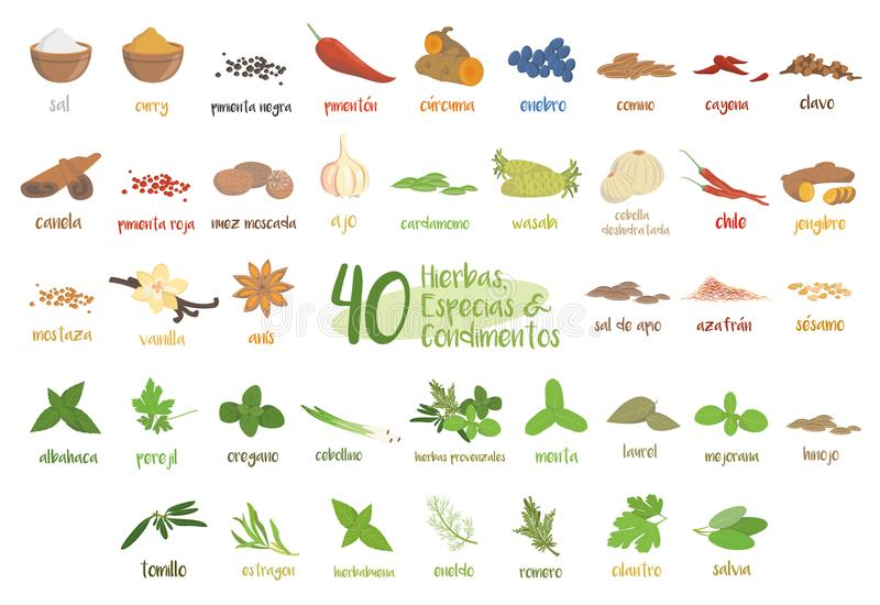 Set of 40 different culinary herbs, species and condiments in cartoon style. Spanish names. stock illustration