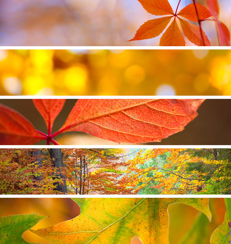 Set of Different Fall Banners - beautiful Autumn season. Set of Different Fall Banners - colorful vibrant backgrounds, beautiful Autumn season stock images
