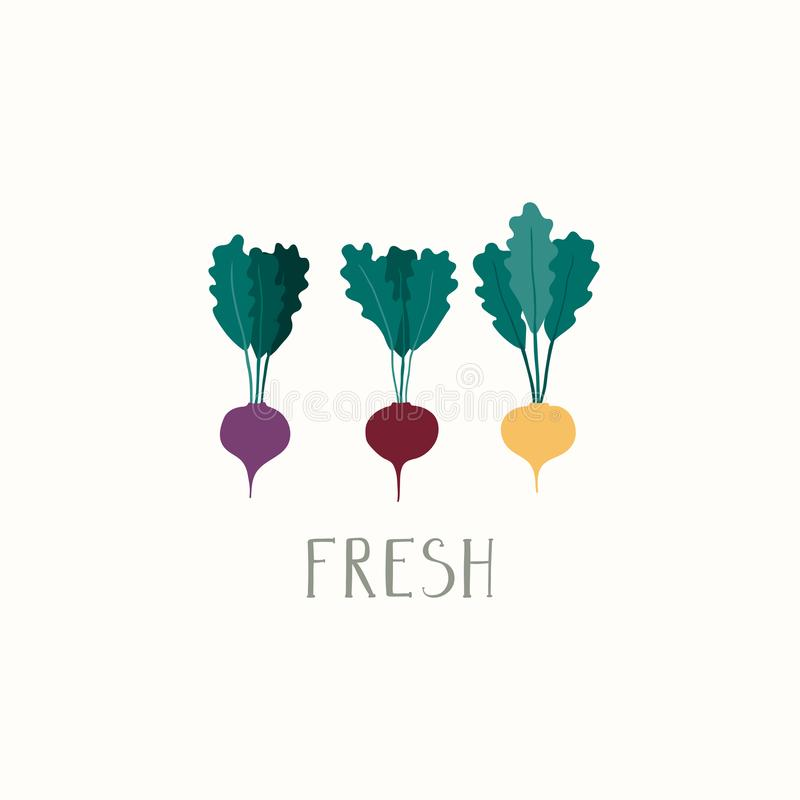 Set of different flat beetroots. Hand drawn minimal vector illustration of different beetroots, with lettering quote Fresh. Isolated objects on white background royalty free illustration