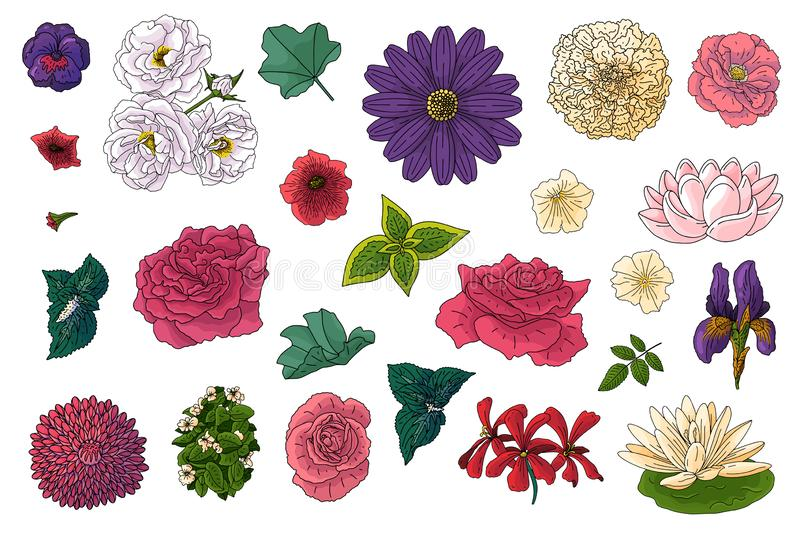 Set of different flowers in doodle style. Hand drawn elements for wedding floral design, vector illustration. Spring blossom royalty free illustration