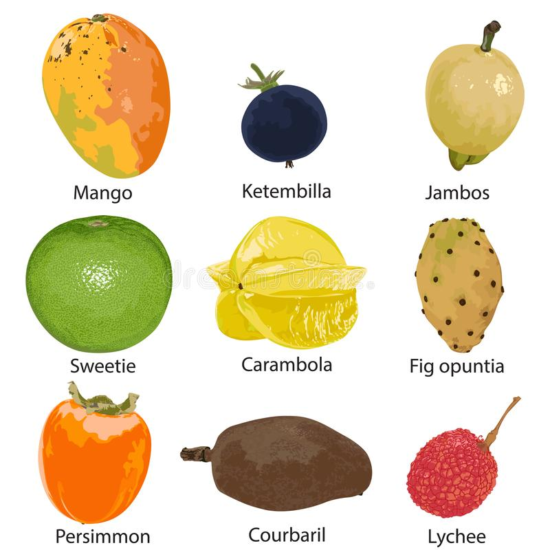 Set of different fruits. 9 different fruits on a white background stock illustration