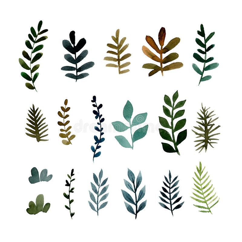 Set of different green branches of plants royalty free illustration