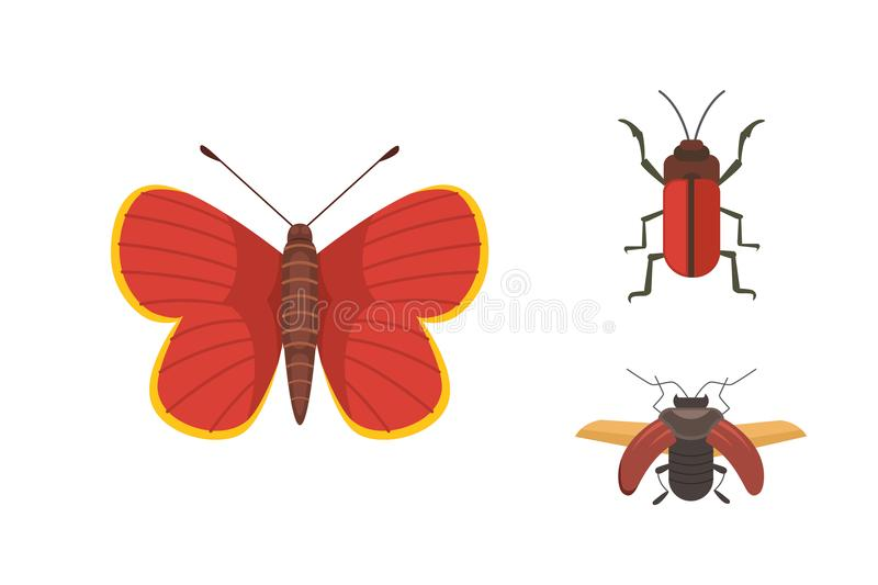 Set of different insects in cartoon style. Butterfly and beetle. vector illustration