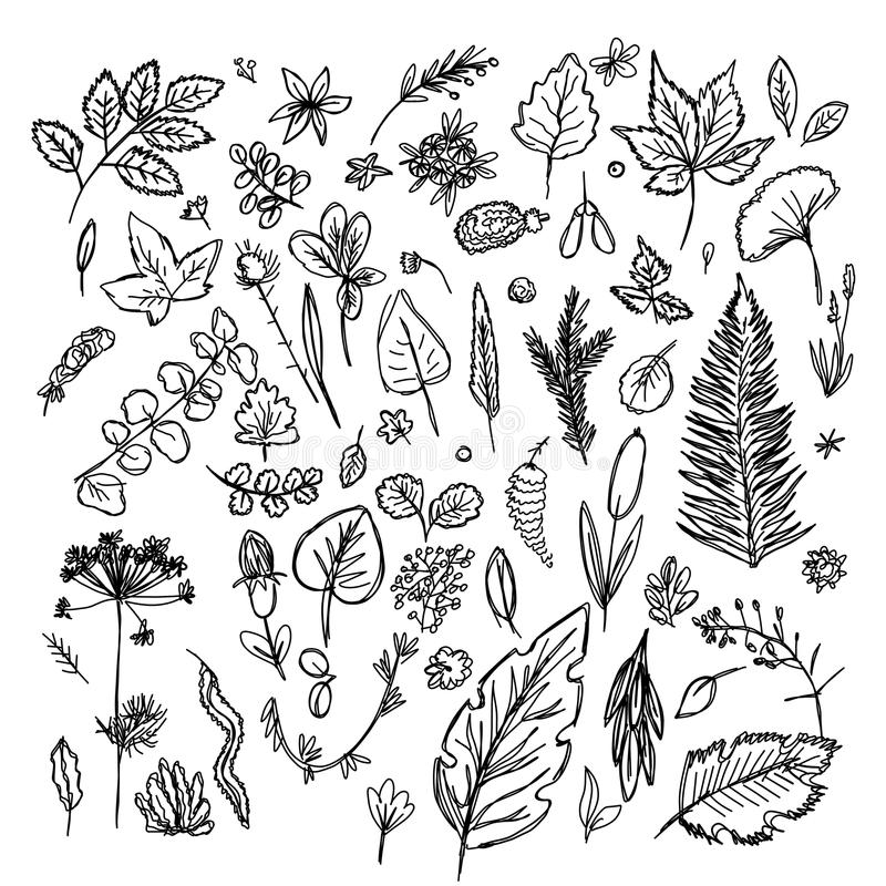 Set of different leaves and branches drawn in the style of children`s drawing fast by hand royalty free illustration