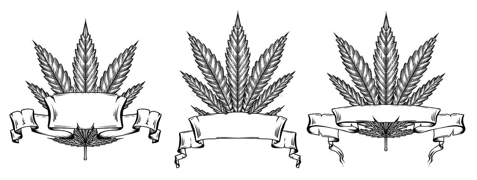 Set of different leaves of marijuana with hatching and scroll parchment banner. The object is separate from the background. vector illustration
