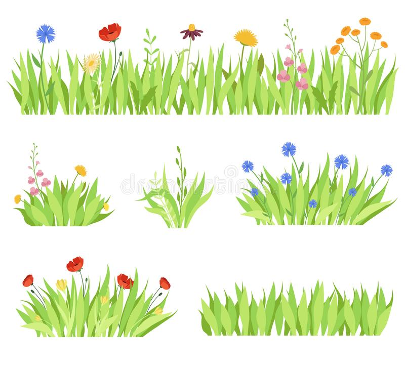 Set of different natural garden flowers in the grass. Fresh garden flower beds on a white background. Vector illustration vector illustration