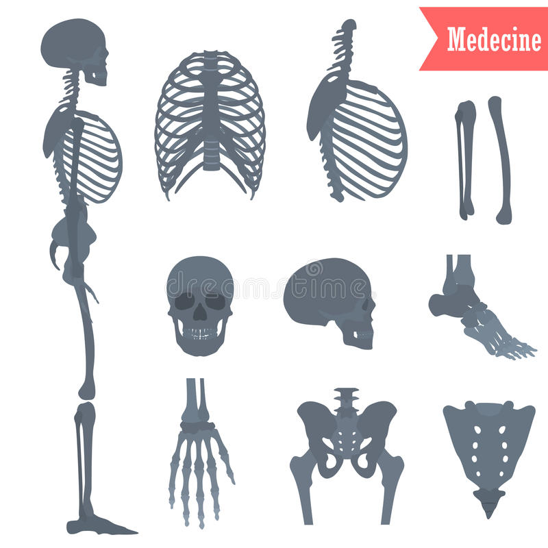 Set Of Different Parts Human Skeleton Icons For Web And Mobile ...