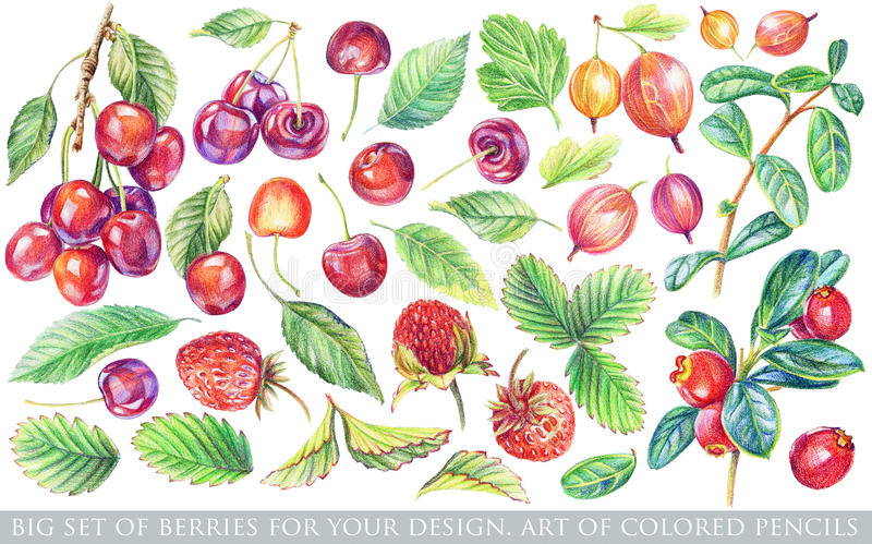 Set of different red, yellow berries and green leaves for design. Drawing with colored pencils. Set of floral elements to create compositions royalty free illustration