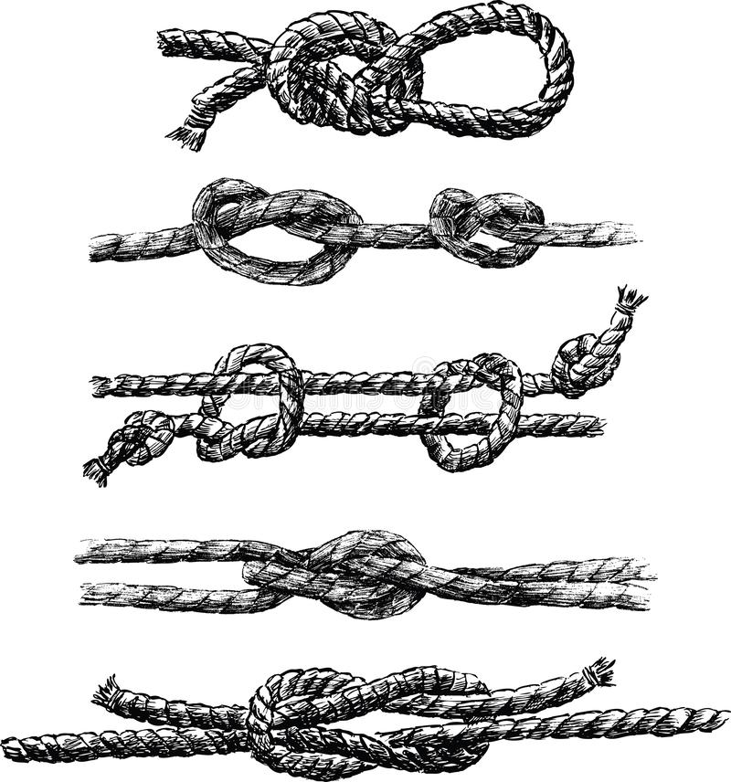 A set of different sea knots. A vector drawing of different sea knots vector illustration