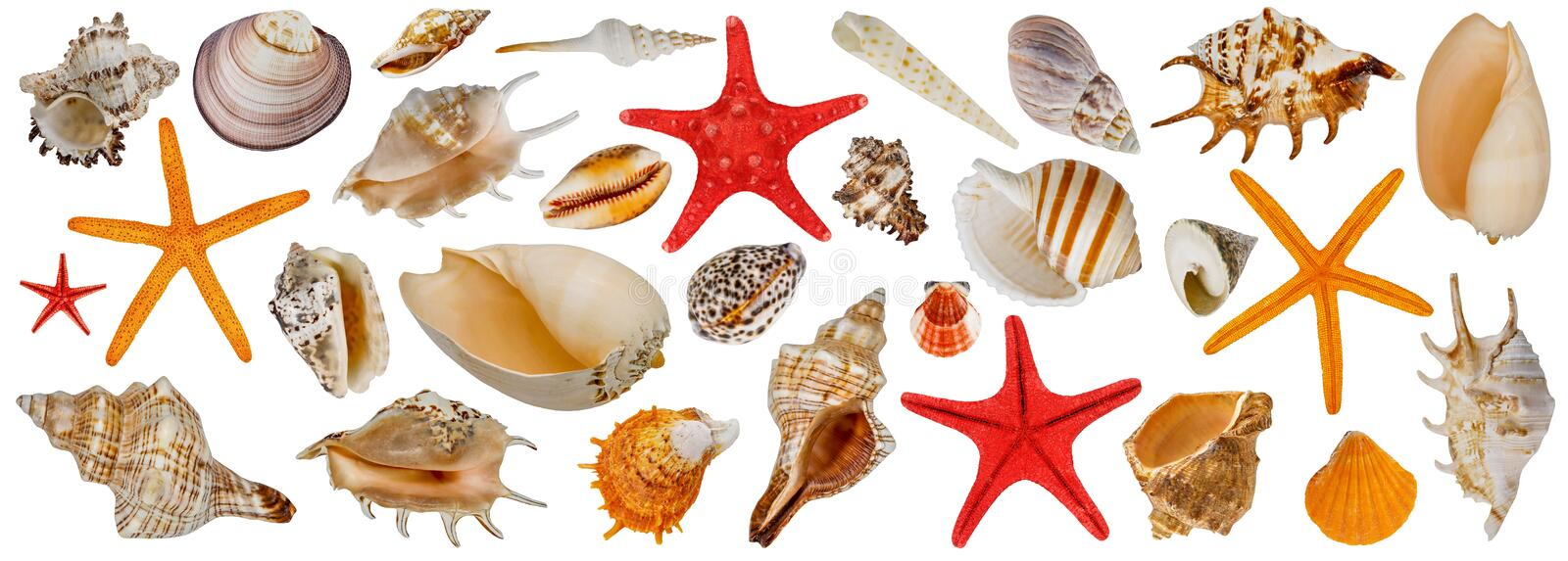 Set of different sea shells. Starfish collection. Isolated on a white background stock images
