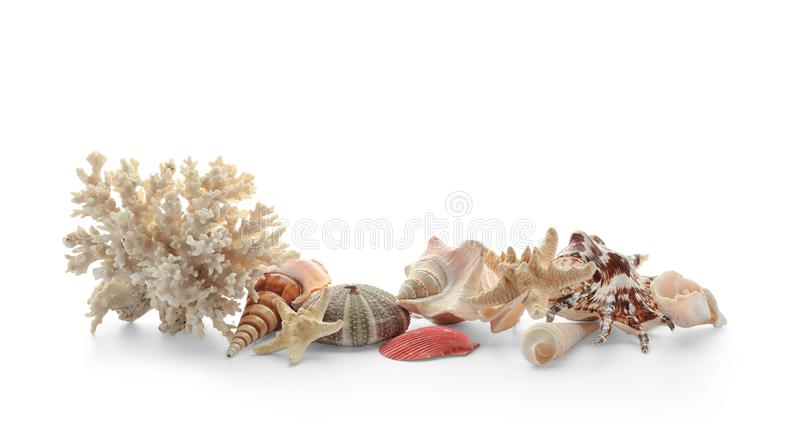 Set of different sea shells, starfish and coral on white background stock photos