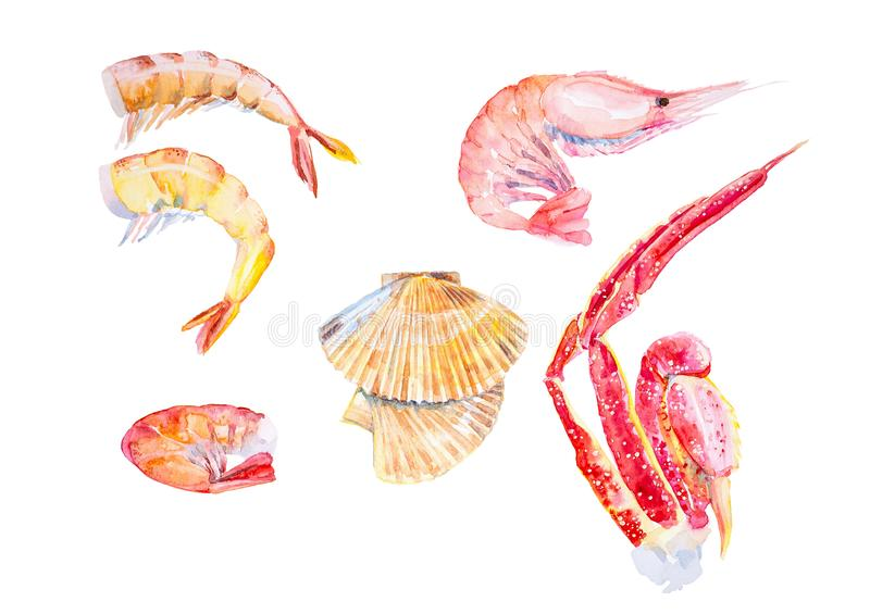 Set of different seafood. Shrimps, lobster,crayfish,scallops, king crab claws. Watercolor illustration isolated on white. Background vector illustration