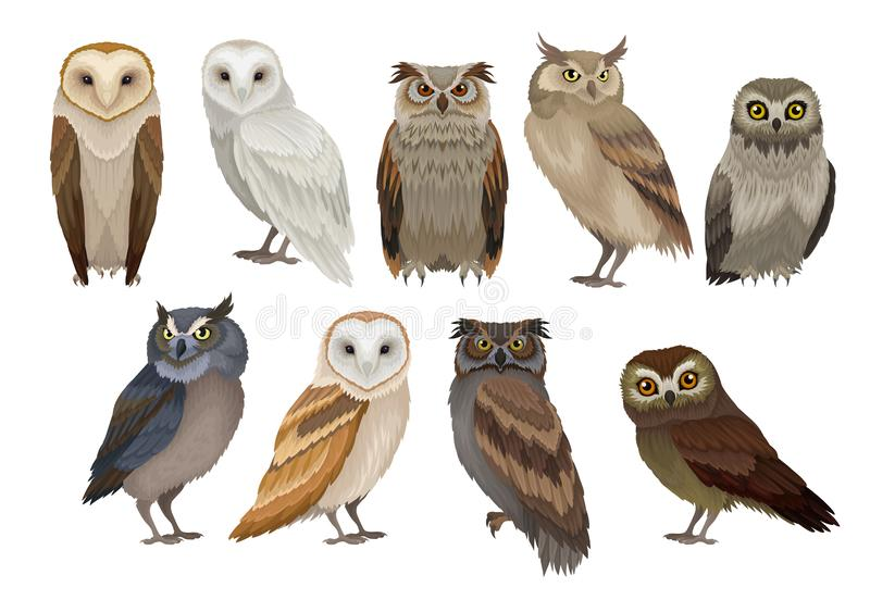 Flat vector set of different species of owls. Wild forest birds. Flying creatures. Elements for ornithology book. Set of different species of owls. Wild forest vector illustration