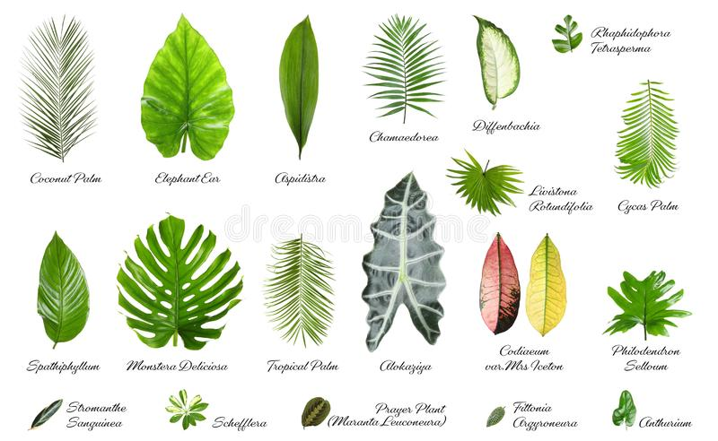 Leaves Collection Names Photos Free Royalty Free Stock Photos From Dreamstime However, rainforests now cover much less of earth's surface than they once did. leaves collection names photos free