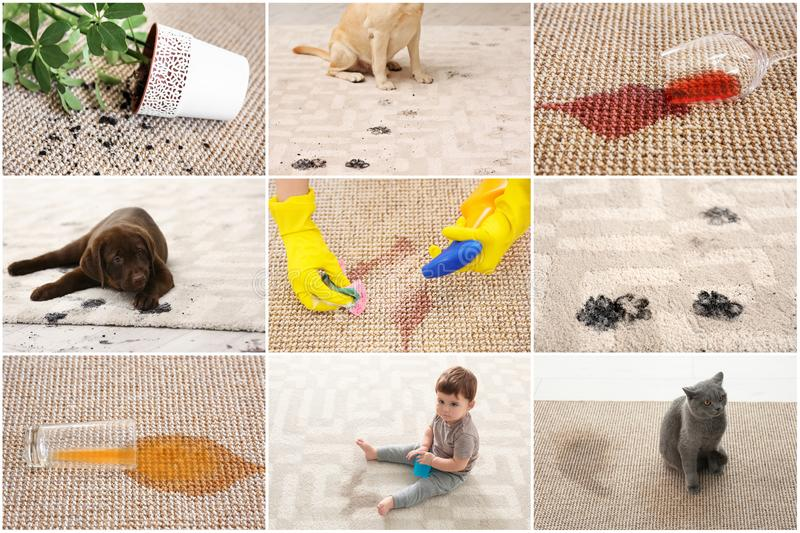 Set with different types of dirt on carpets. Cleaning concept royalty free stock images