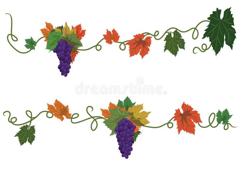 Set dividers z winogronami ilustracji
