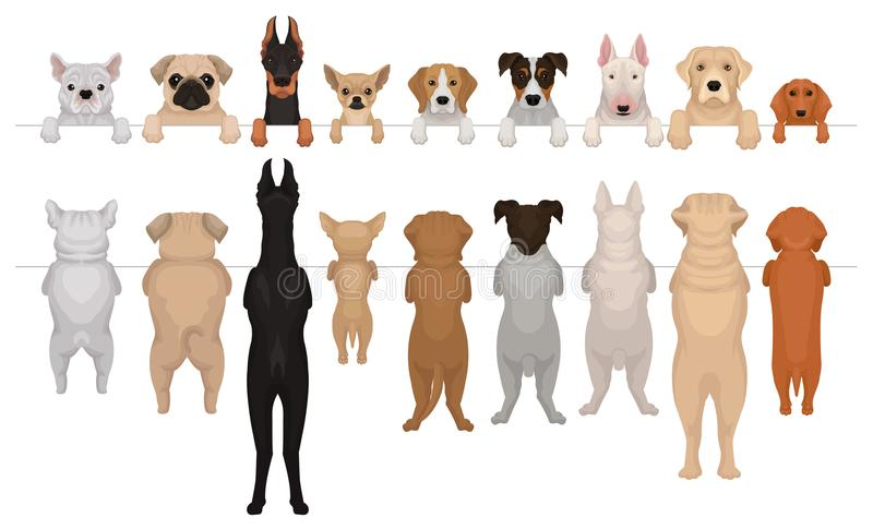 Dogs of different breeds hanging on border. Portraits of muzzles with paws and full bodies. Front and back view. Flat. Set of dogs of different breeds hanging on vector illustration