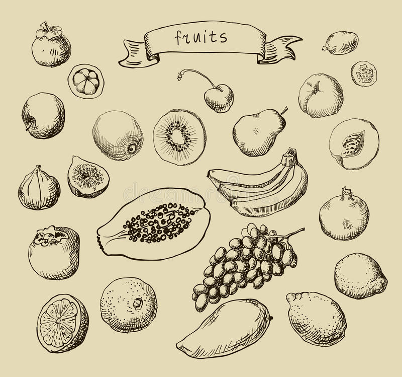 Set of Doodle Fruits hand drawn in vector illustration