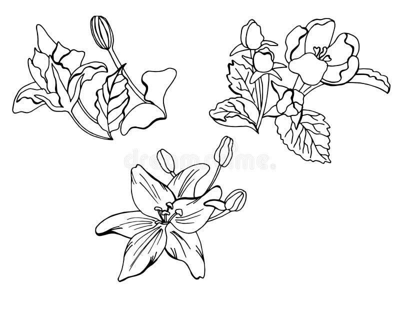 Set doodle kwieci?ci elementy ilustracja wektor