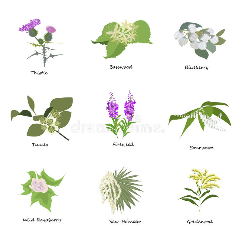 Set of drawing wild flowers,. Herbs and leaves, painted field plants, botanical illustration in flat style, colored floral collection, hand drawn vector image royalty free illustration