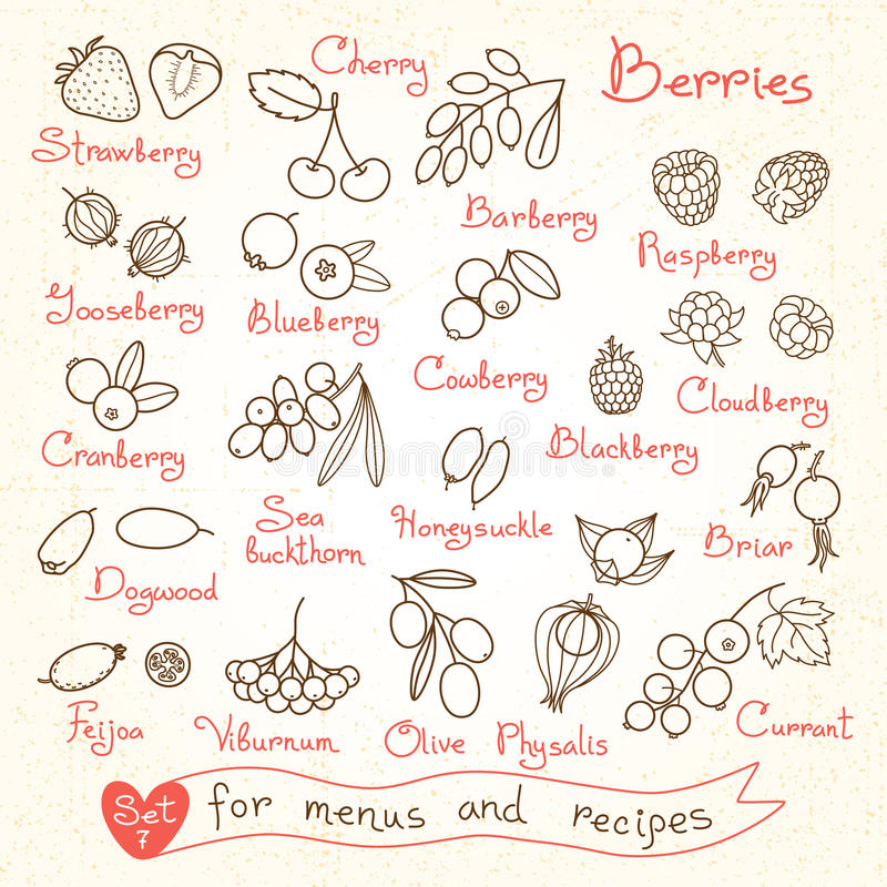 Set drawings of berries for design menus, recipes royalty free illustration