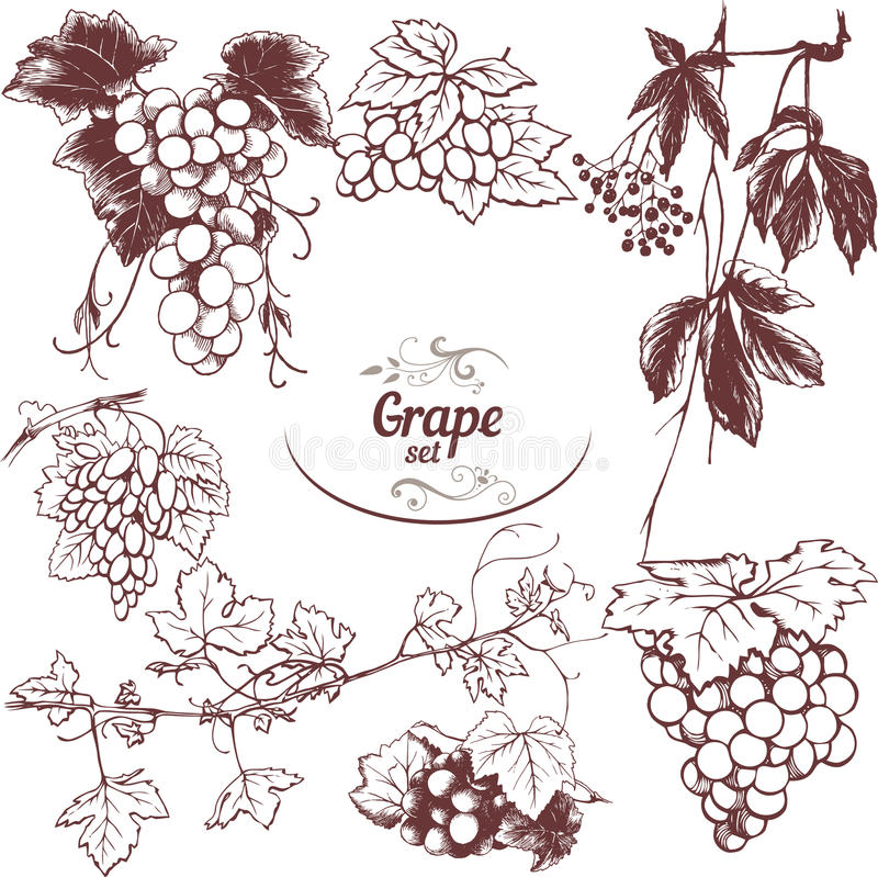 Set of drawings grapes vector illustration