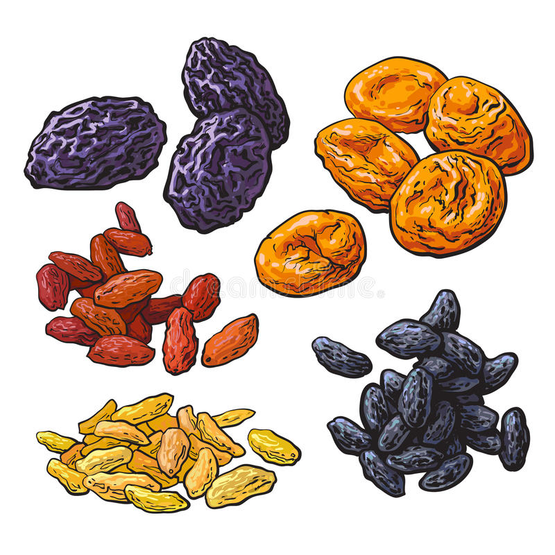 Set of dried fruits - prunes, apricots and raisins. Sketch style vector illustration on white background. Drawing of dries plums, dries apricots and a mix of stock illustration