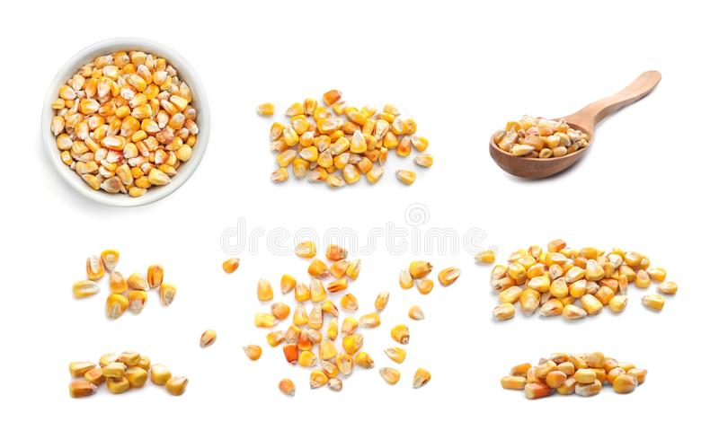 Set with dry corn kernels. On white background royalty free stock images