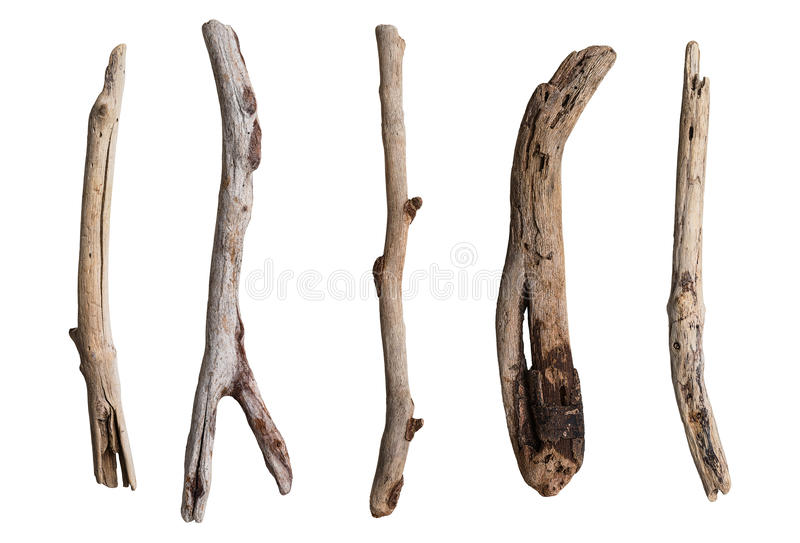 Download Set of dry tree branch stock photo. Image of coast, isolated - 63064286
